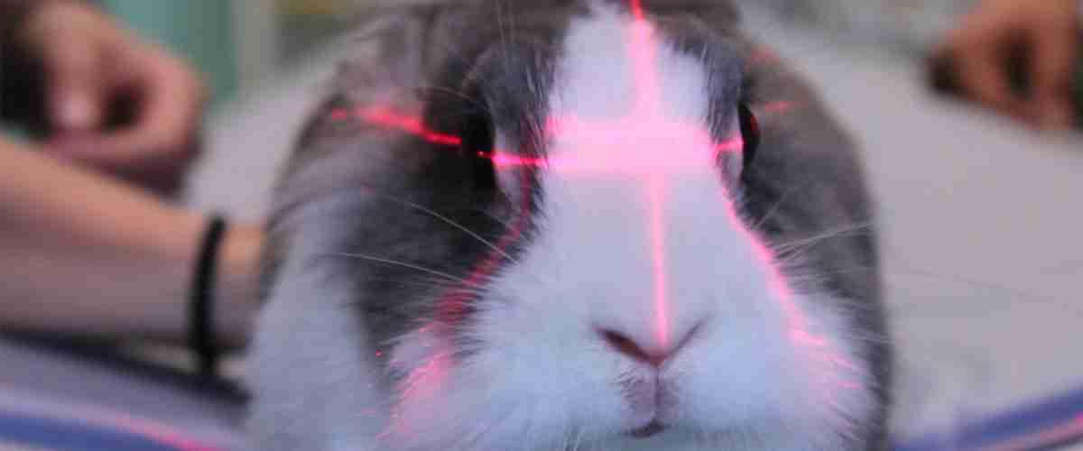 TAC testa di un coniglio, Clinica Veterinaria Modena Sud